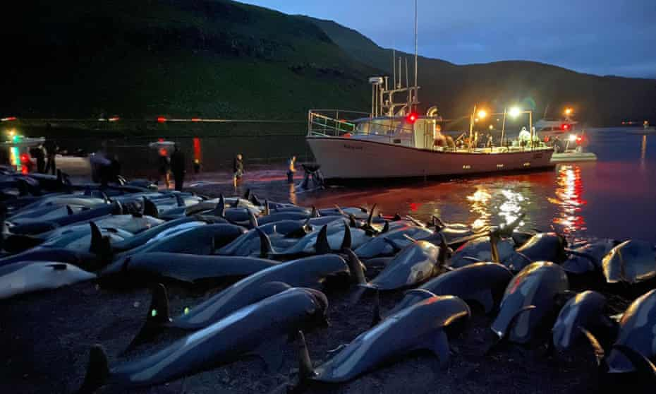 Dolphin carcasses on Eysturoy in the Faroe Islands on Sunday.