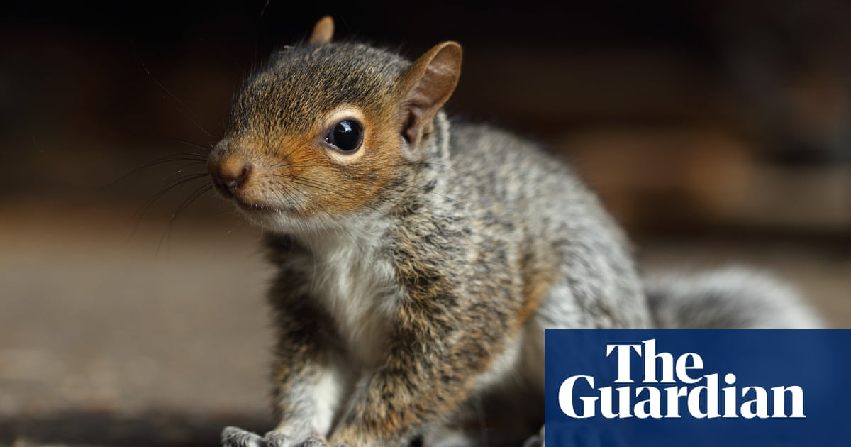 Police in Germany rescue man being chased by baby squirrel