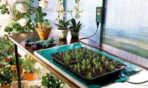Warming seedlings with BioGreen's heat pad