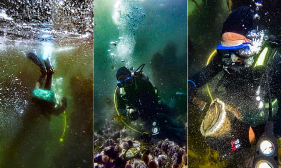 A poacher hunts for abalone in the waters off Cape Town's Atlantic seaboard
