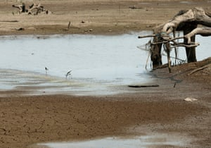 Birds drink water from a nearly dried up Mae Chang reservoir in Lampang, Thailand. El Niño has intensified hot weather in the region, resulting in rapid depletion of water levels in lakes, rivers and dams.