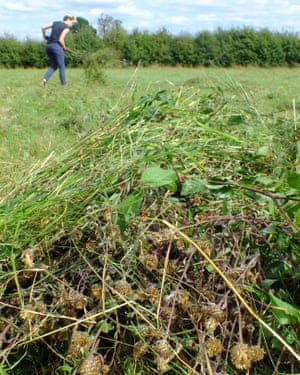 A pile of the seed-rich hay.
