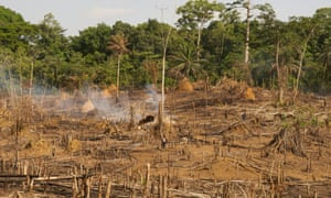 Sino County, Liberia: A person stands amid the remnants of slash and burn deforestation.