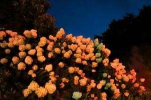 Night Before Aretha Died, Brooklyn Botanic Garden, 2018
