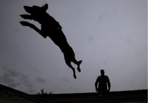 Rostov on Don, RussiaRussian National Guard holds second championship for dog handlersROSTOV-ON-DON-REGION RUSSIA OCTOBER 4, 2018: A police dog jumping over a fence during the second championship for dog handlers held by the Russian National Guard.