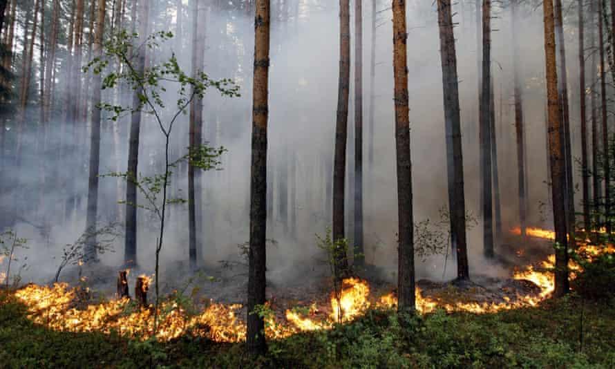 Smoke from forest fires in 2010 blew into major cities, causing respiratory illnesses and death.
