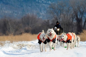 Marla Brodsky, a pro-musher, practises with her team of dogs at a 10mph pace in Northampton, Massachusetts. She is building the animals' distance endurance so they can enter races such as the Can-Am International dog sled event in March