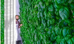 Plenty, a vertical farm and startup in San Francisco, aims to tackle the challenge of feeding a fast-growing world.
