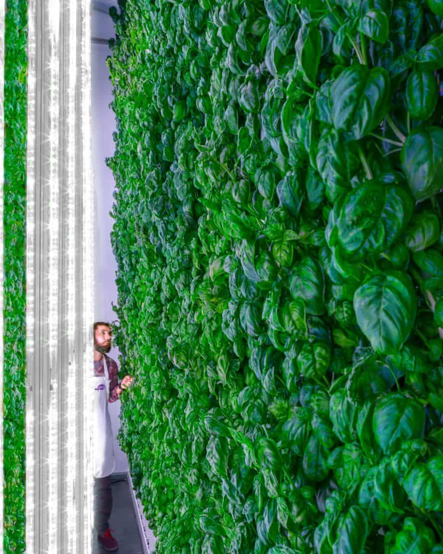 Plenty's vertical farm.