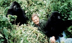 David Attenborough with mountain gorillas in Rwanda in a classic Life on Earth episode from the late 1970s.