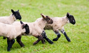 Around 89% of UK lamb exports go to the EU.