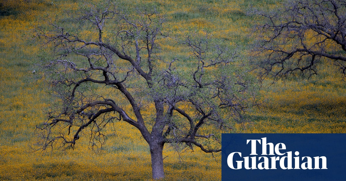 An American tragedy: why are millions of trees dying across