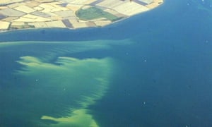 An algae slick off the German Baltic coast near the Fehmarn Sound Bridge in 2003.