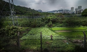 A farmer waters his crops in what little rural land remains between Shenzhen and Hong Kong.