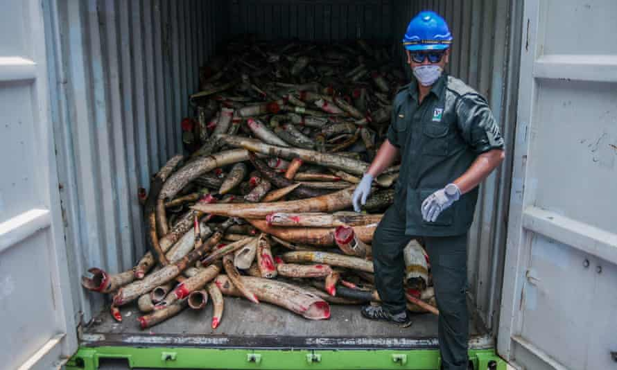 More than 9.5 tonnes of seized elephant ivory was destroyed in Malaysia