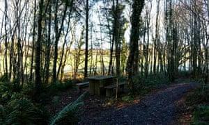 Boduan Sanctuary Wood
