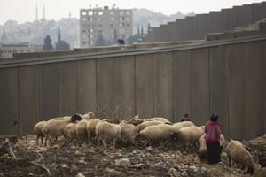 A Palestinian shepherd tends her flock by a section of Israel's separation barrier near the Al Za'im checkpoint.