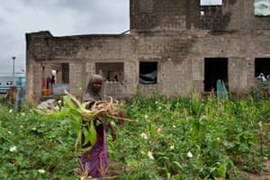 A woman collects vegetables to eat next to an abandoned building which she and her family occupied 2 years ago when they had to flee their town, which had been taken over by Boko Haram. Bololo, Maiduguri.
