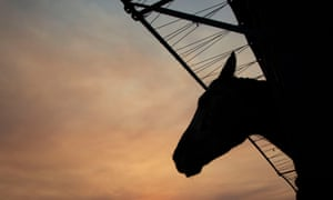 The equestrian community 'will move heaven and earth to make sure these horses are taken care of'.