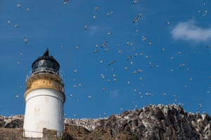 Gannets fly above the rock's lighthouse which was built in 1902. It has been unmanned since 1988 and is now remotely monitored from Edinburgh