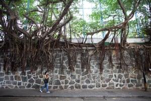 Tree roots in Hong Kong
