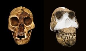 Emerging ancestors: 'The Hobbit' Homo floresiensis, left, and Homo naledi.