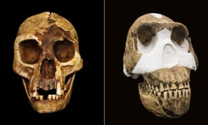 'The Hobbit' Homo floresiensis and Homo Naledi: Two recent hominin species that we haven't recovered DNA from yet.