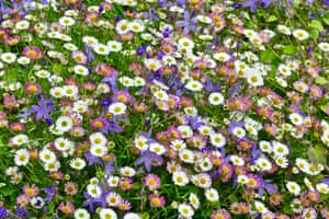 A bank of wild flowers add a touch of colour to a grey day in Dungy Head