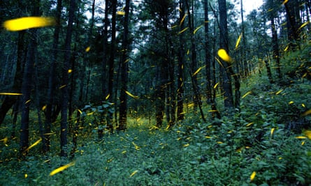 Fireflies light up in sync in the woods of Piedra Canteada, near Nanacamilpa, Tlaxcala state, Mexico. The income from tourism is providing a new incentive to residents to focus on conservation.