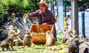 A man feeds longtail macaques in the town of Lopburi, some 155 km north of Bangkok in June.