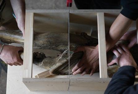 Like body-in-the-trunk murder scenes … at work in Danh Vo's studio in Germany.