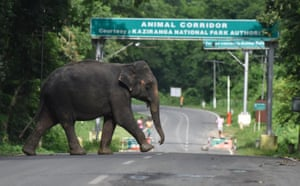 An elephant crosses National Highway 37 which passes through the flooded Kaziranga national park in the northeastern state of Assam, India
