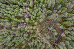 Trees seen from above.