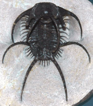 Ceratarges spinosus, a spiky trilobite from the Devonian of Morocco.