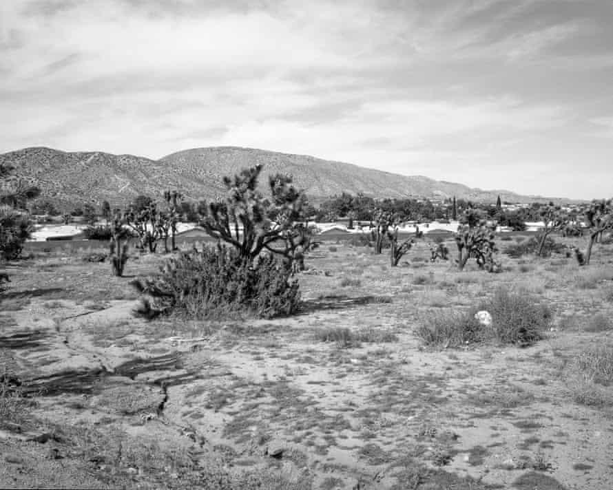 Prairie winds … a desert scene.