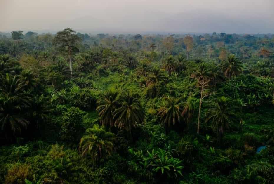 Jungle terrain near the town of Kamango, North Kivu.