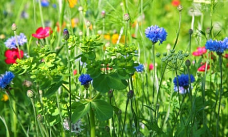 Flower meadow in summer