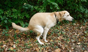 Dog fouling in park