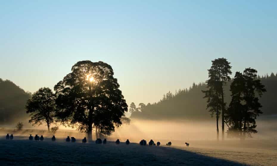 Sunrise in Savernake Forest, near Marlborough.
