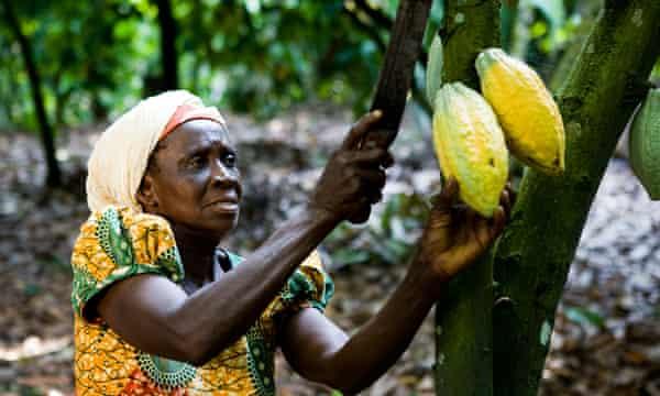 Farmers in Ghana now face an infestation of the fall armyworm.