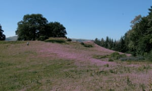The motte and bailey at Sycharth with fireweed growing.