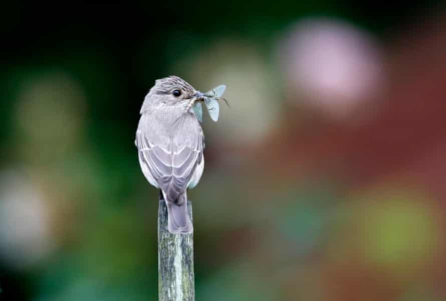 Bird eating an insect