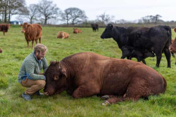 Beef farmer Henry Andrews, Leworthy Manor, Devon.