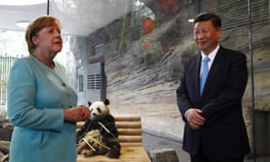 German chancellor Angela Merkel and Chinese president Xi Jinping officially open the new panda enclosure for viewing at Berlin zoo.