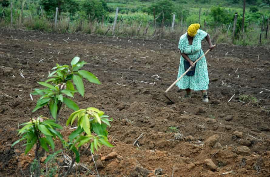 A smallholding in Eswatini