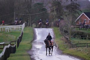 Horses from Nicky Henderson's Seven Barrows Yard make their way to the gallops.