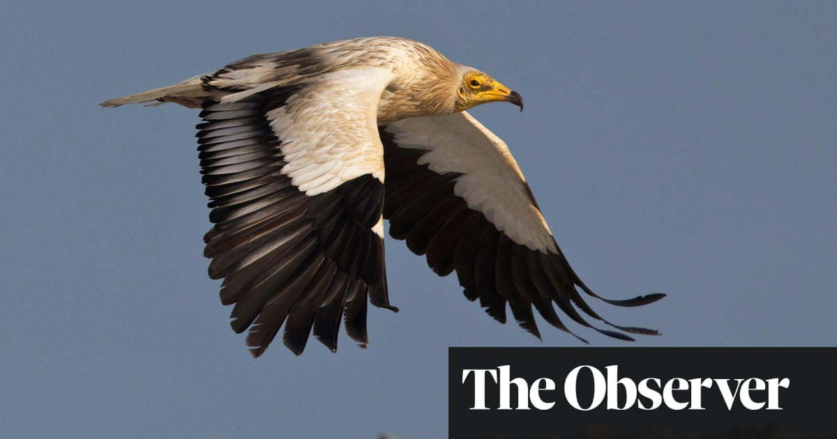 Vultures, tongue orchids: why are rare species here in UK?