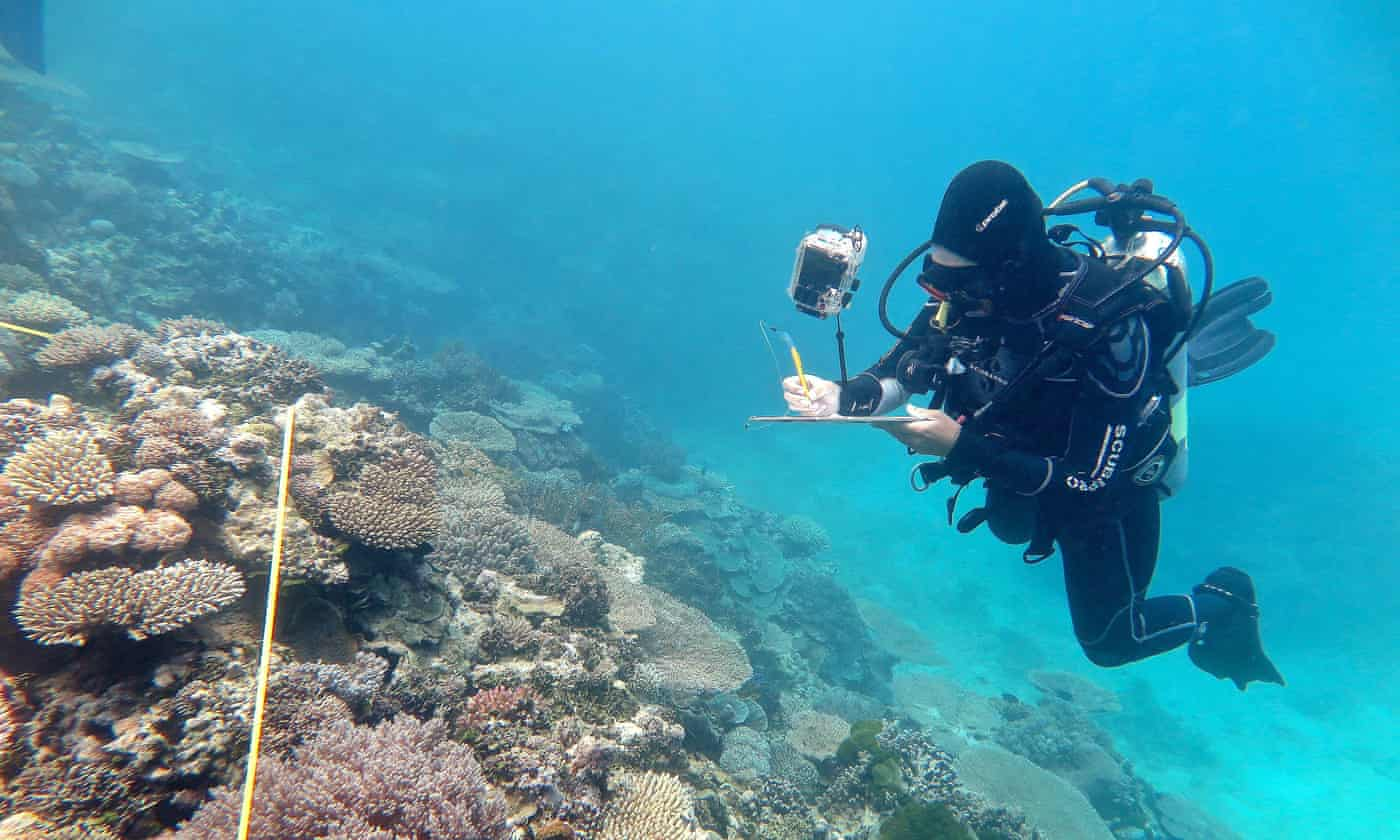 Great Barrier Reef authority urges 'fastest possible action' on emissions