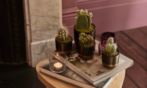 The Little Botanical Cactus Plant Family