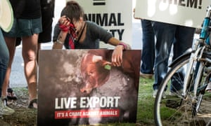Protests against live sheep exports in Perth